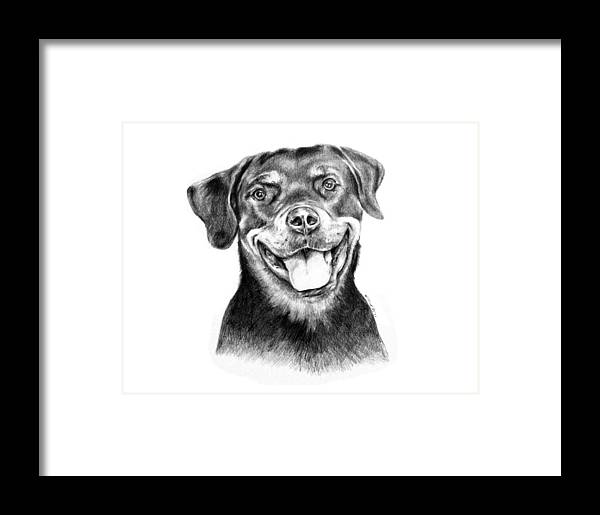 Rottweiler Framed Print featuring the drawing Rocky The Rottweiler by Kinga Baransky