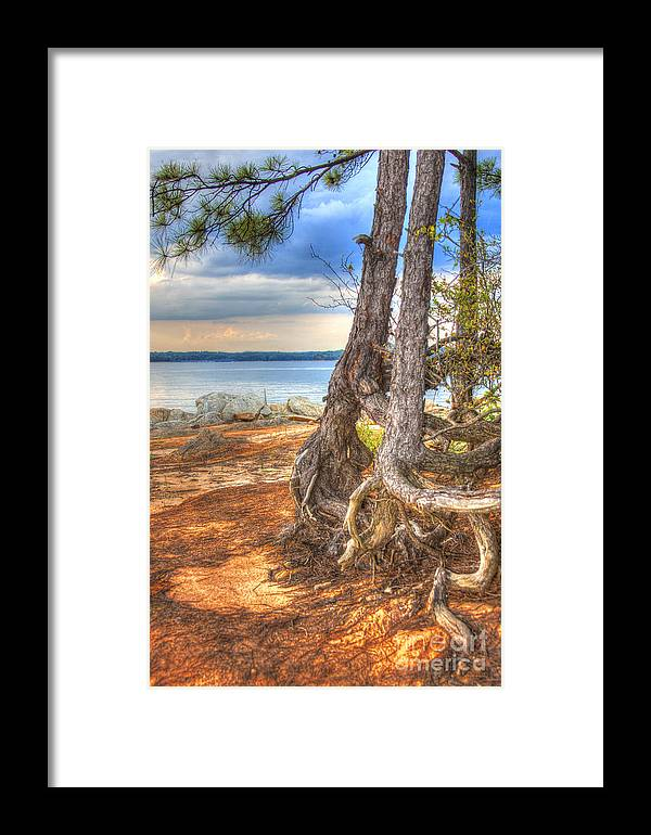 Lake Framed Print featuring the photograph Roots by Tony Reilly