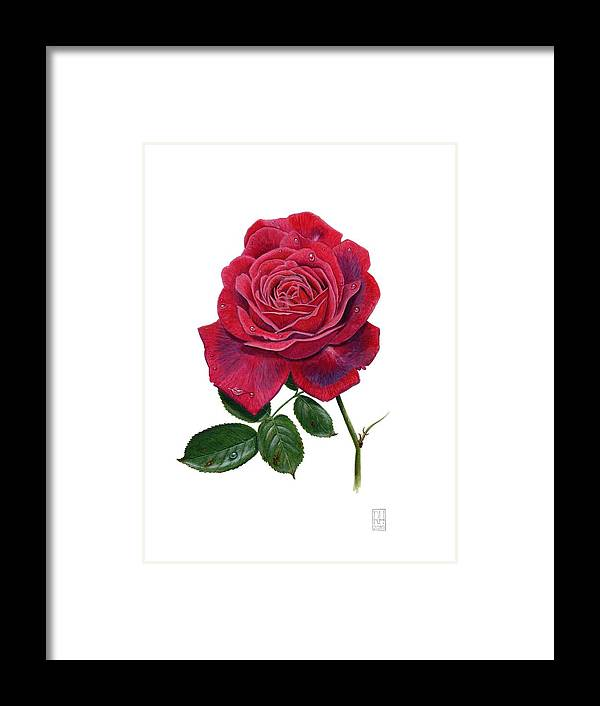 Rose Framed Print featuring the painting Rose 1 by Richard Harpum