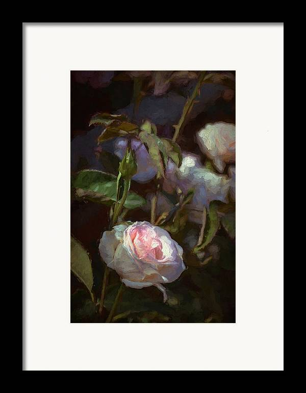 Floral Framed Print featuring the photograph Rose 122 by Pamela Cooper