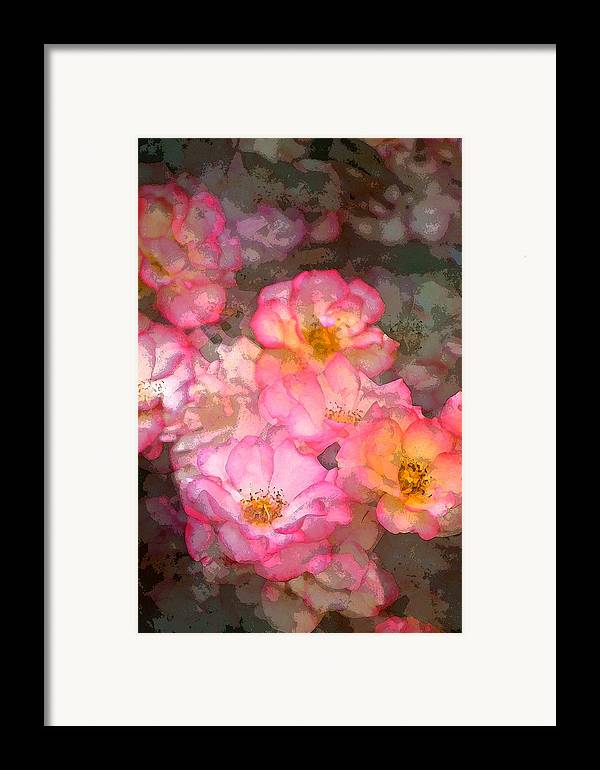 Floral Framed Print featuring the photograph Rose 210 by Pamela Cooper