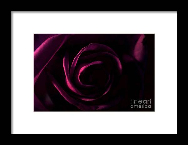 Rose Framed Print featuring the photograph Rose And Shadows by Robin Lynne Schwind