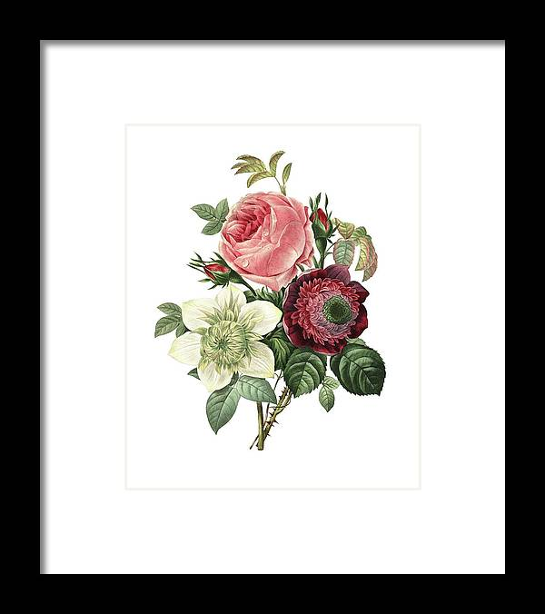 White Background Framed Print featuring the digital art Rose, Anemone And Clematis | Redoute by Nicoolay