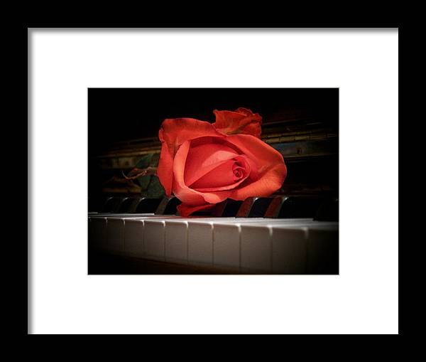 Music Framed Print featuring the photograph Rose On Piano by Joyce Kimble Smith