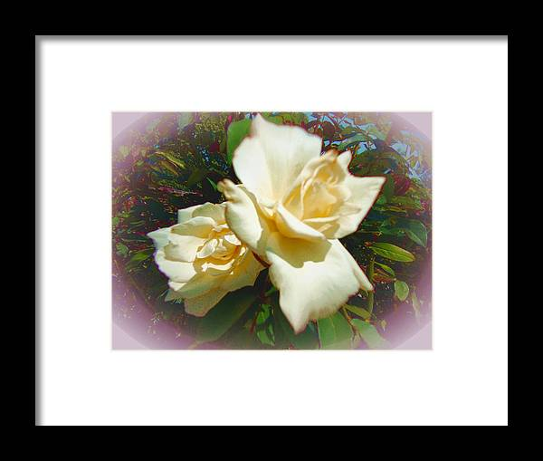 Roses Framed Print featuring the photograph Rose Oval by Pepsi Freund