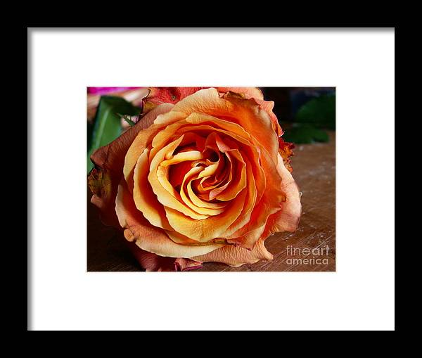 Rose Framed Print featuring the photograph Rose by Sarka Olehlova