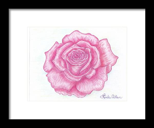 Rose Framed Print featuring the painting Rose Sketch by Linda Allan