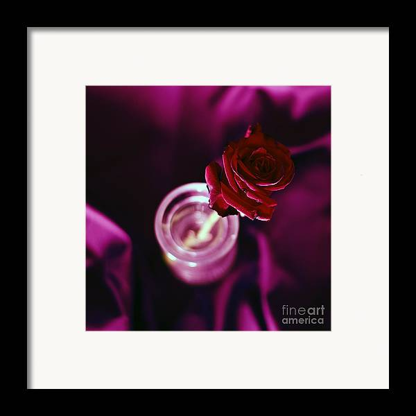 Arrangement Framed Print featuring the photograph Rose by Stelios Kleanthous