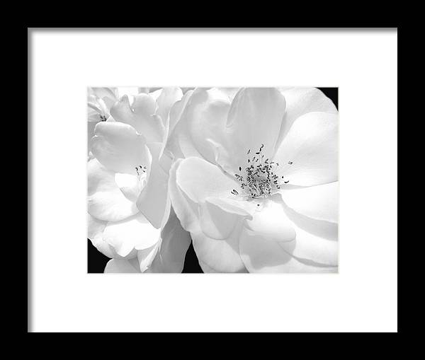 Rose Framed Print featuring the photograph Roses Soft Petals In Black And White by Jennie Marie Schell