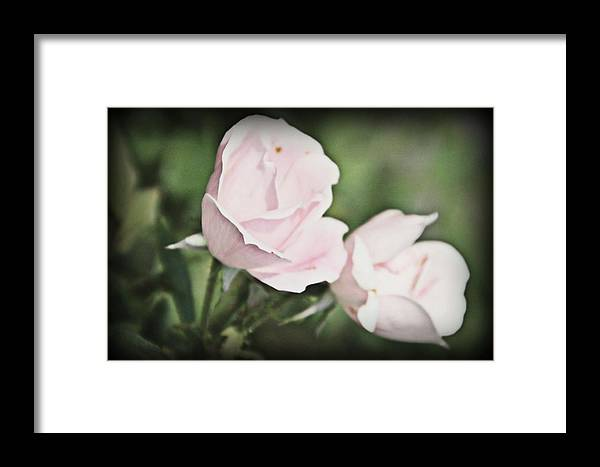 Rose Framed Print featuring the photograph Roses by Stephanie Leidolph