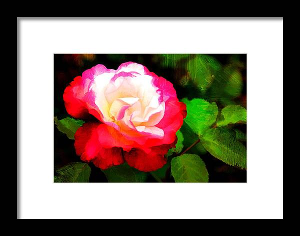 Flower Framed Print featuring the photograph Rosie Red And White by Diane Wood
