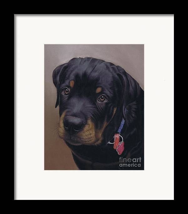 Dog Framed Print featuring the pastel Rottweiler Dog by Karie-Ann Cooper