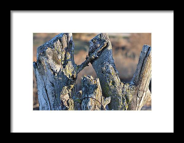 Nature Framed Print featuring the photograph Rough Hewn by Kim Hymes