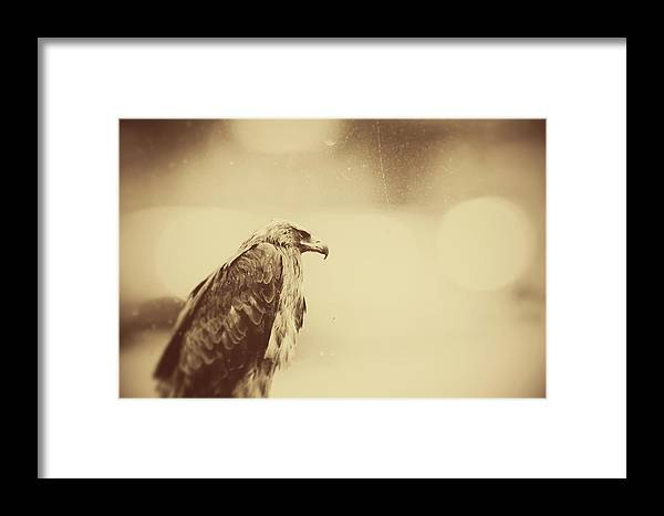 Eagle Framed Print featuring the photograph Route 66 by Studio Yuki