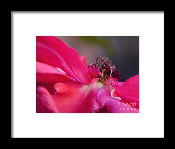 Fine Art Flower Photography Framed Print featuring the photograph Roxie by Irina Wardas