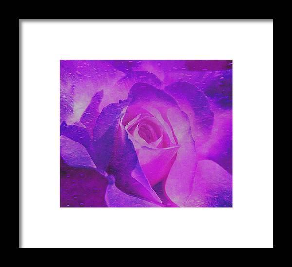 Purple Rose Framed Print featuring the digital art Royal Rose by Dennis Buckman