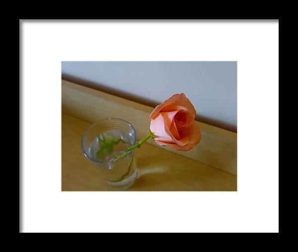 Roze Framed Print featuring the digital art Rozi by Syed Suhaib Pasha