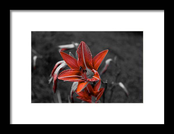 Ruby Framed Print featuring the photograph Ruby Red by Julien Boutin