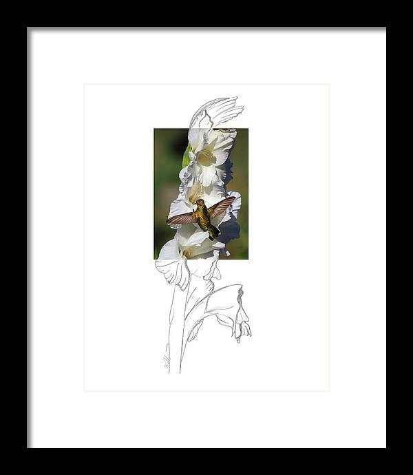 Ruby-throated Hummingbird Framed Print featuring the photograph Ruby-throated Hummingbird 2AM-104192 by Andrew McInnes