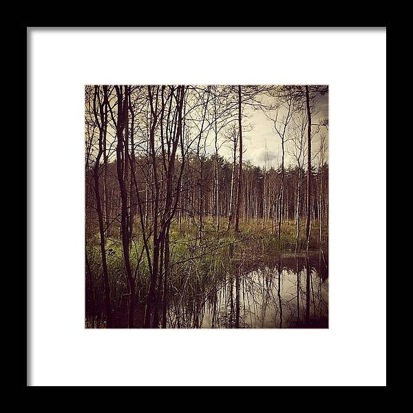 Autumn Framed Print featuring the photograph Autumn in the Woods by Illusorium Illustration