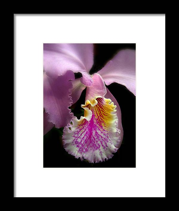 Flowers Framed Print featuring the photograph Ruffled by Jessica Jenney