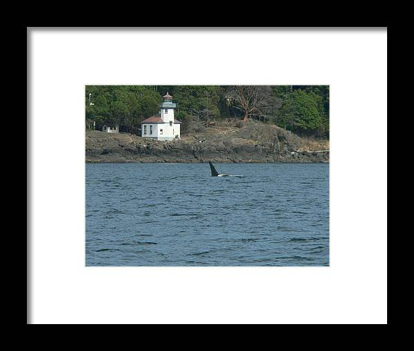 Orcinus Orca Ruffles Framed Print featuring the photograph Ruffles At The Lighthouse by Kimo Fernandez