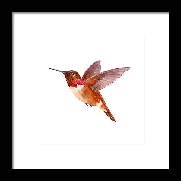 Bird Framed Print featuring the painting Rufous Hummingbird by Amy Kirkpatrick
