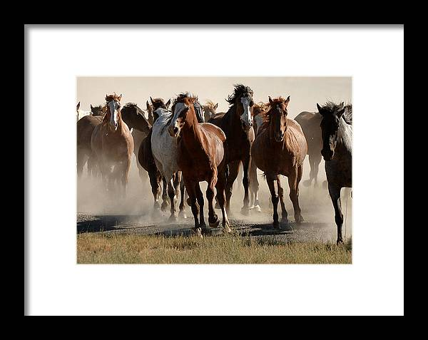 Horses Framed Print featuring the photograph Running Free by Lee Raine