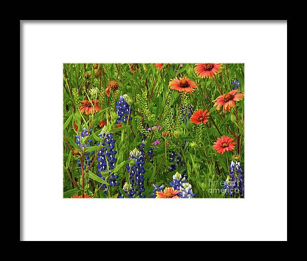 Wildflowers Framed Print featuring the photograph Rural Color by Joe Jake Pratt