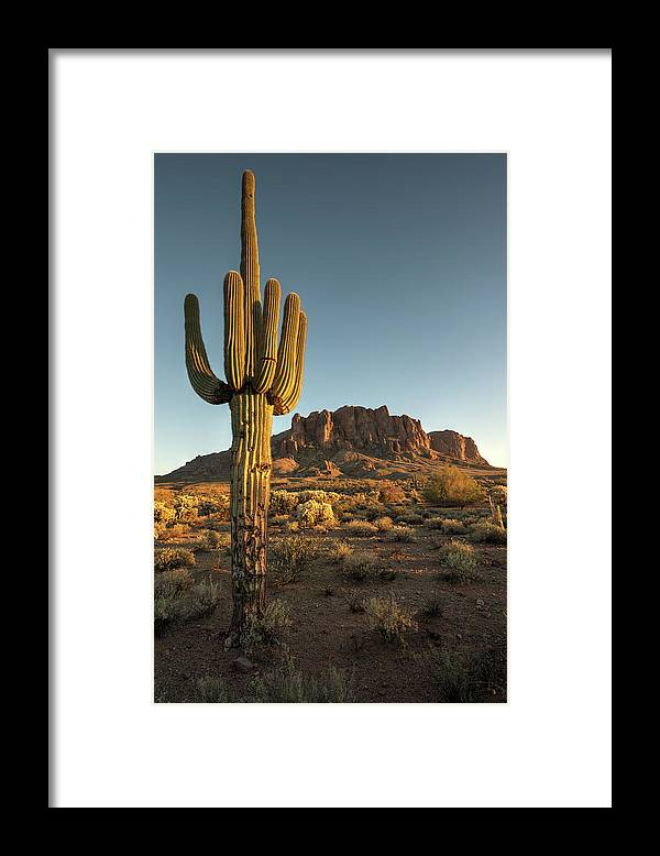 Saguaro Cactus Framed Print featuring the photograph Saguaro Cactus And Superstition by Kjschoen