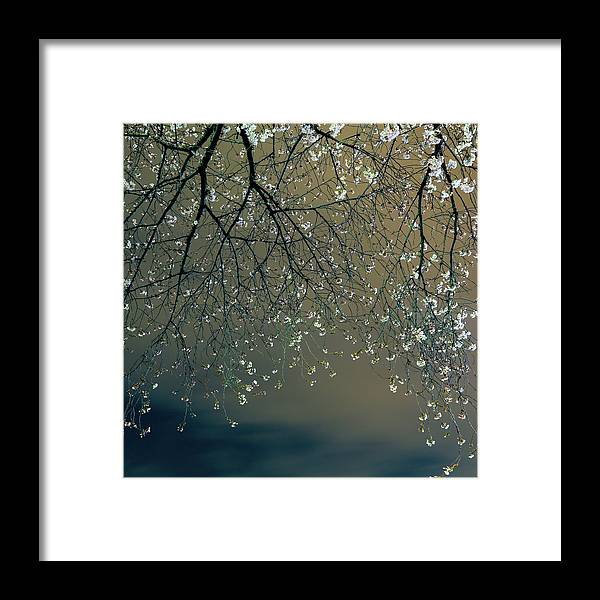 Tranquility Framed Print featuring the photograph Sakura 2013 2 by Aquirae
