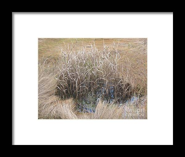 Fall Framed Print featuring the photograph Salt Marsh In Fall by Barbara Milhender