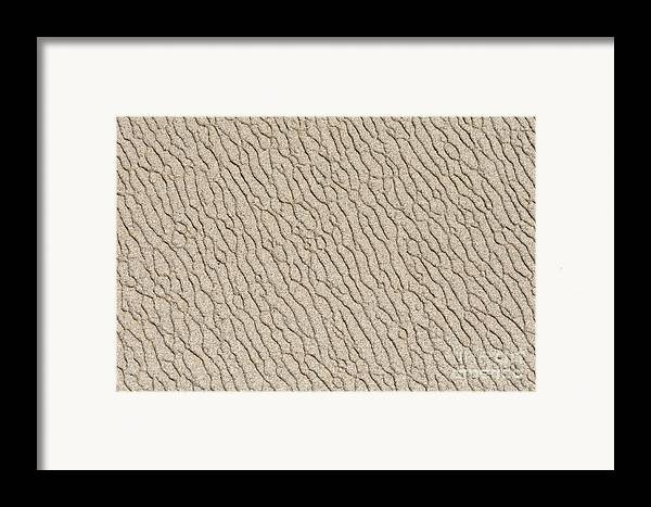 Point Lobos Framed Print featuring the photograph Sand Skin by Artist and Photographer Laura Wrede
