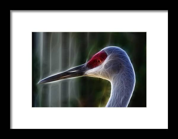 Sandhill Crane Framed Print featuring the photograph Sandhill Electric by Prism Light Studios