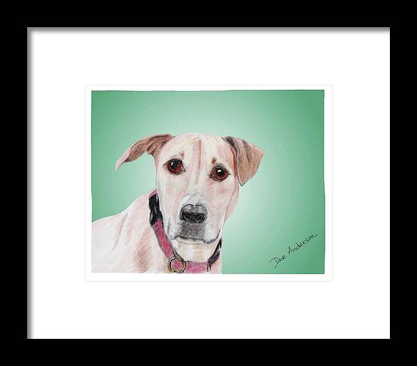 Dog Framed Print featuring the drawing Sandy - A Former Shelter Sweetie by Dave Anderson