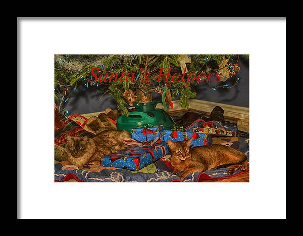 Abyssinian Framed Print featuring the photograph Santa's Helpers by Gary Hall