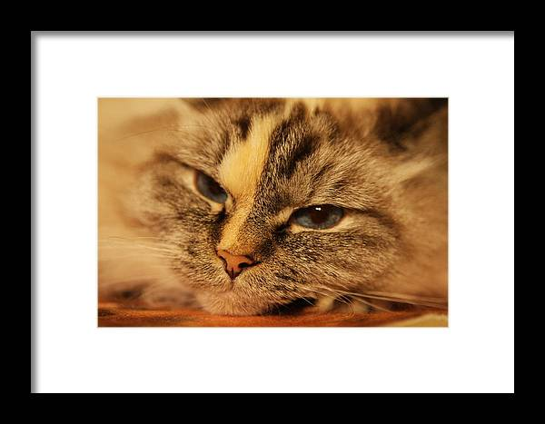 Framed Print featuring the photograph Sasha by M R