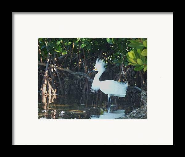 Snowy Egret Framed Print featuring the photograph Sassy Snowy Egret by Anna Villarreal Garbis