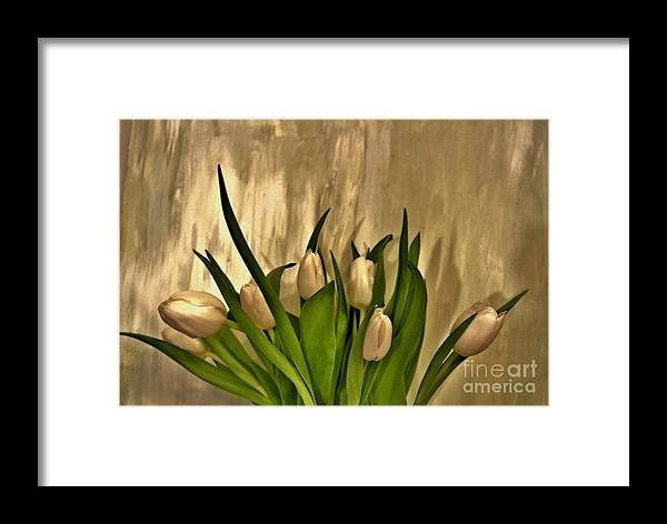 Photo Framed Print featuring the photograph Satin Soft Tulips by Marsha Heiken