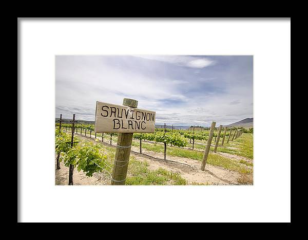 Sauvignon Framed Print featuring the photograph Sauvignon Blanc Grapes Growing In Vineyard by Jit Lim