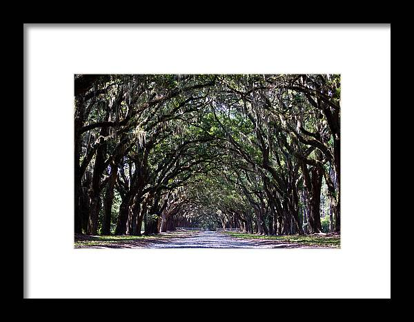 Savannah Framed Print featuring the photograph Savannah Wormsloe by John McGraw