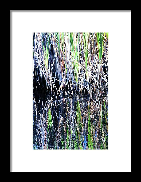 Landscape Framed Print featuring the photograph Sawgrass Reflections by Kicking Bear Productions