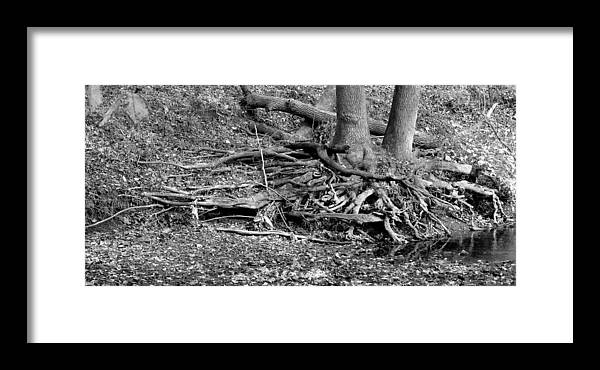11.12.14_a 115 Framed Print featuring the photograph Scary Roots by Dorin Adrian Berbier
