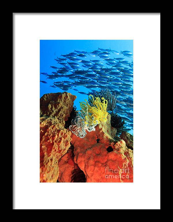 Underwater Framed Print featuring the photograph School Of Fishes by MotHaiBaPhoto Prints