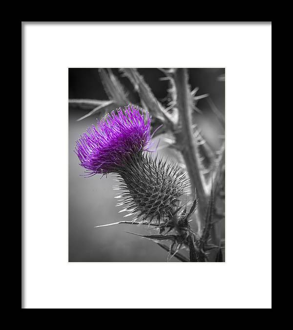 Scotland Calls 2 by Scott Campbell
