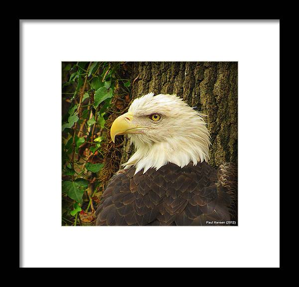 Eagles Framed Print featuring the photograph Scouting by Paul Hansen