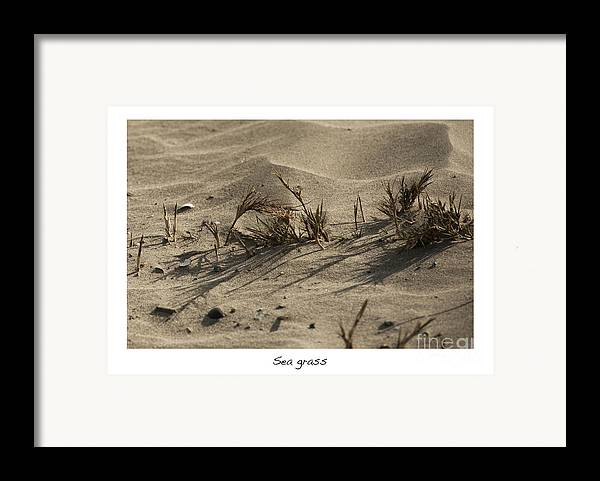 Sea Grass In The Sand Framed Print featuring the photograph Sea Grass by Artist and Photographer Laura Wrede
