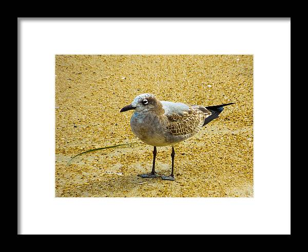 Shore Framed Print featuring the photograph Sea Gull by Donna Shaw