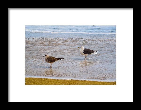 Sea Gulls Framed Print featuring the photograph Sea Gull Pair by Donna Shaw