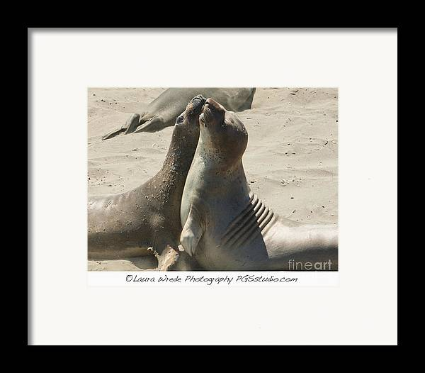 Sea Lions Framed Print featuring the photograph Sea Lion Love From The Book My Ocean Contact Laura Wrede To Purchase This Print by Artist and Photographer Laura Wrede